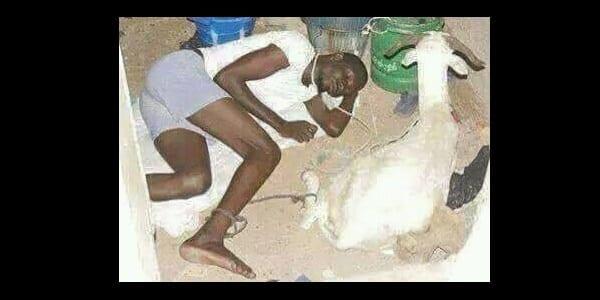 Photo de Pour la fête de la tabaski, un homme trouve une stratégie pour empêcher qu'on vole son mouton