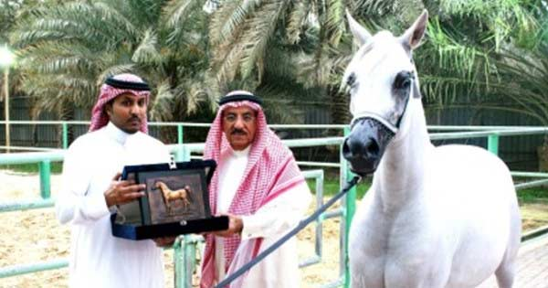 Photo de Arabie Saoudite : Un célèbre cheval de course sera exécuté à cause de son Homos3xualité