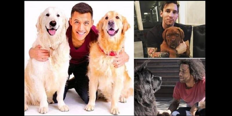 Photo de Lionel Messi, Mesut Ozil…Ces joueurs amoureux de chiens: PHOTOS