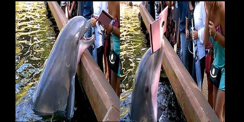 Photo de Un dauphin arrache l'iPad d'une femme le prenant en photos