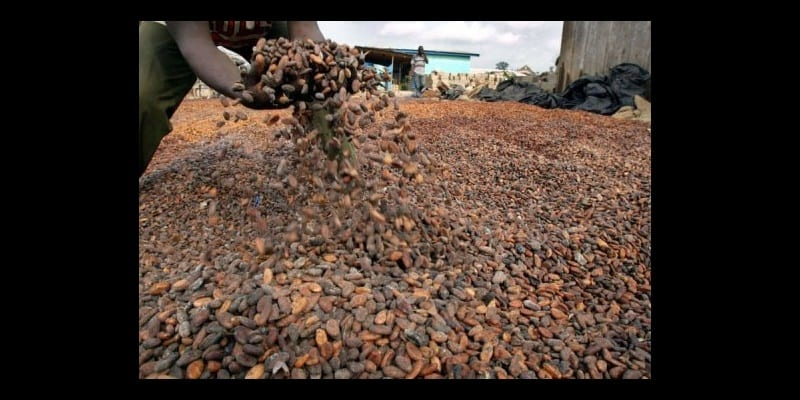 Photo de côte d'ivoire: 35 tonnes de cacaos détournées à Yopougon