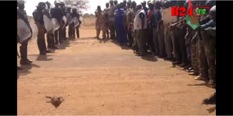 """Photo de Burkina Faso-Vidéo Buzz: Incroyable ! Un coq « joue » le """"médiateur"""" entre militaires et forces de sécurité"""