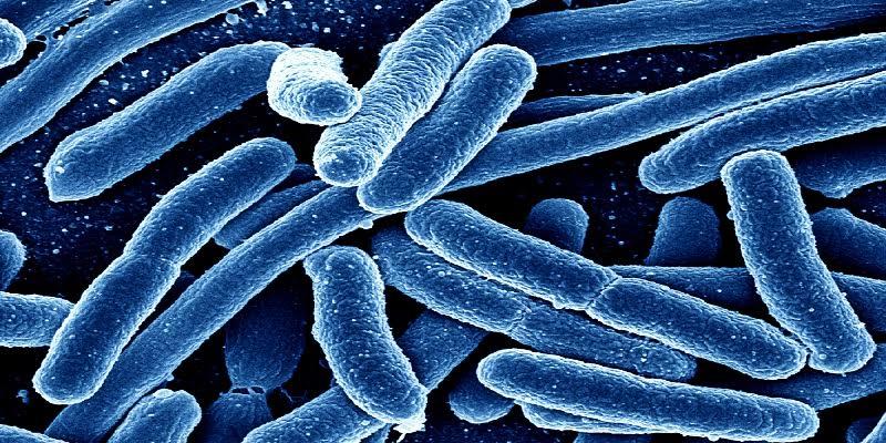 Photo de Santé : Voici 7 objets qui sont des nids à microbes chez vous