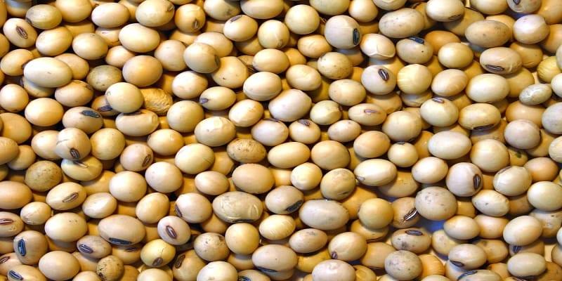 Photo de Santé: Voici pourquoi il faut consommer plus de soja dans vos repas