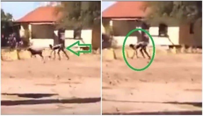 Photo de Afrique du Sud : une créature mi humain mi chien repérée dans une localité du pays (Vidéo)