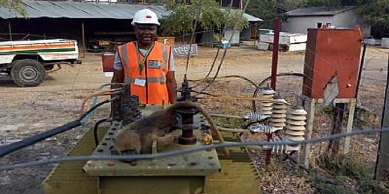 Photo de Zambie: un babouin prive les populations d'électricité