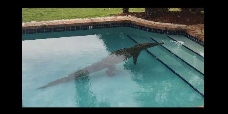 Photo de Mexique: un jeune homme attaqué par un crocodile, dans une piscine d'hôtel!