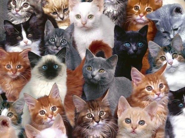 Photo de Un tueur en série de chats condamné à une lourde peine de prison. Photo