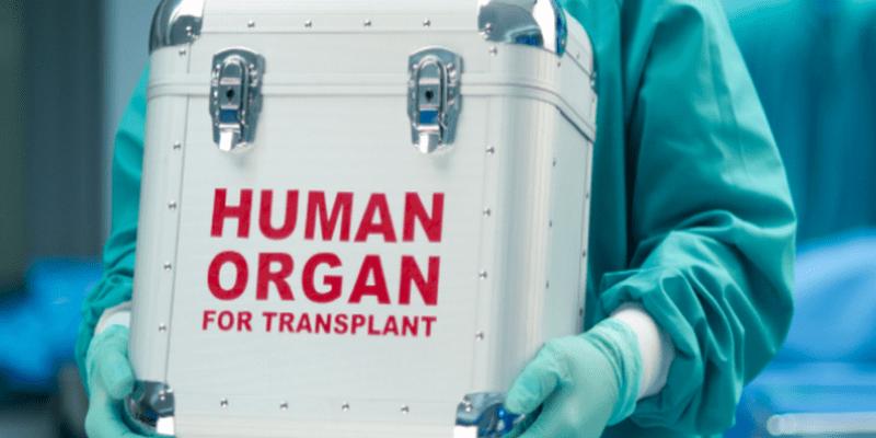 Photo de Egypte : un réseau de trafic d'organes démantelé