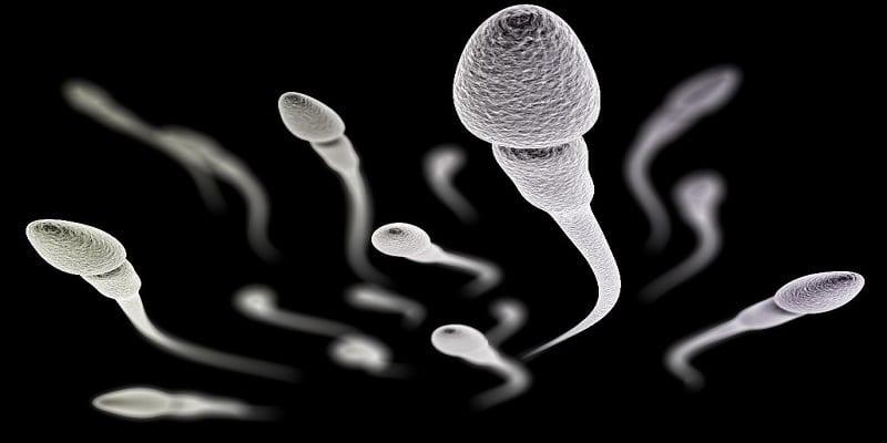 Photo de Combien de temps les spermatozoïdes peuvent-ils vivre à l'extérieur du corps?