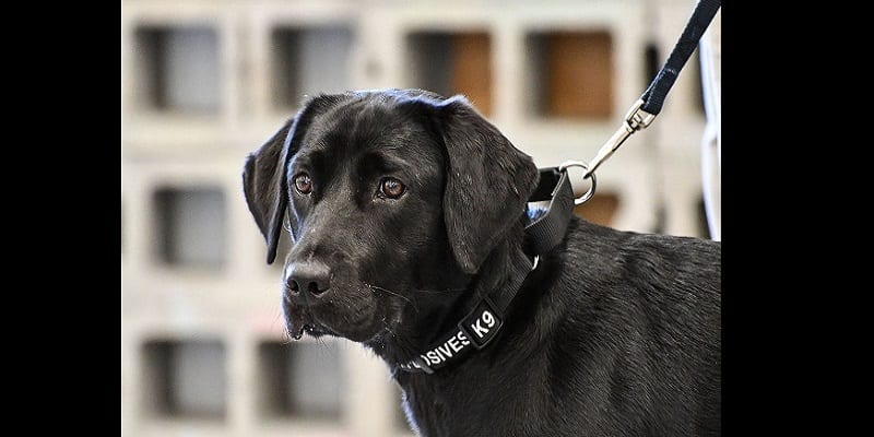 Photo de La CIA vire un chien renifleur de bombes…La raison vous étonnera