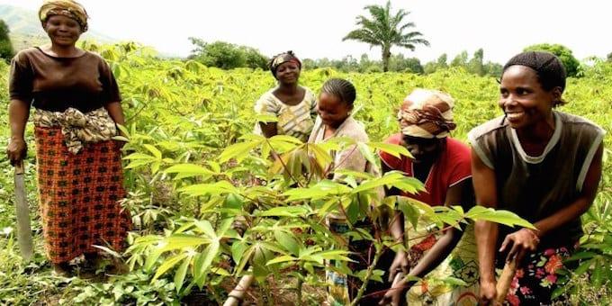 Photo de Selon la FAO,  la RD.Congo aurait la capacité de nourrir l'Afrique, les USA et l'Europe réunis