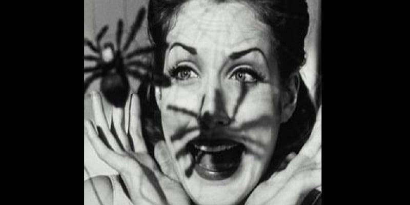 Photo de L'homme naît avec la peur des araignées et serpents (étude)