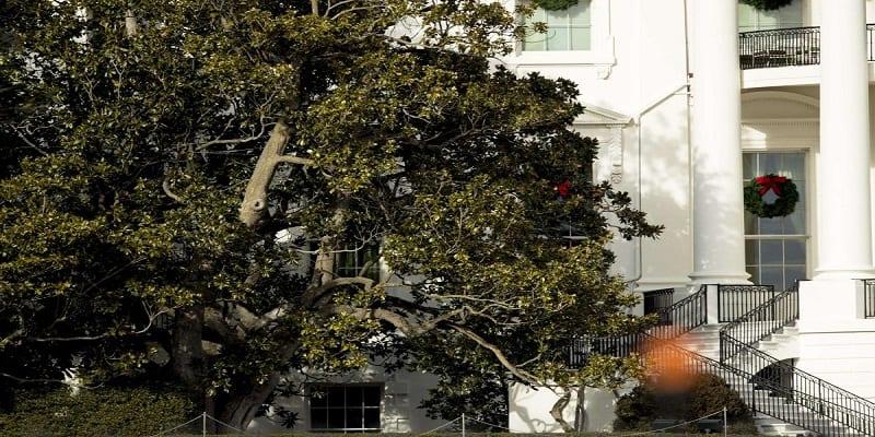 Photo de USA: Melania Trump fait abattre un arbre de 200 ans à la Maison Blanche
