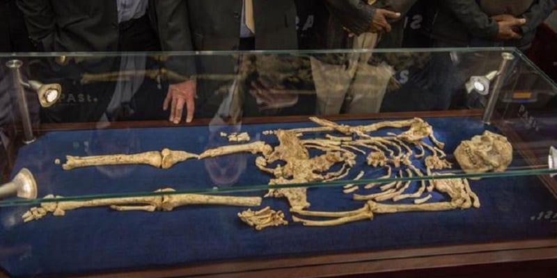 Photo de Little Foot, squelette plus vieux que Lucy dément une importante affirmation des historiens.