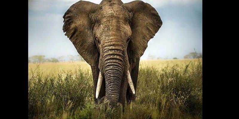 Photo de Afrique: Ces 6 animaux sont les plus recherchés dans l'industrie de la mode. (PHOTOS)