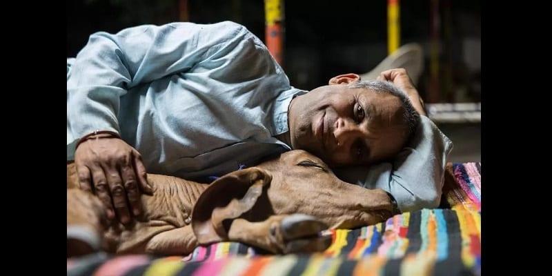 Photo de Inde/Insolite: Un homme abandonne sa famille pour vivre avec ses vaches (photos)