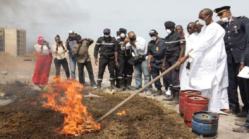 Photo de Sénégal: La Douane détruit 2,6 tonnes de chanvre indien