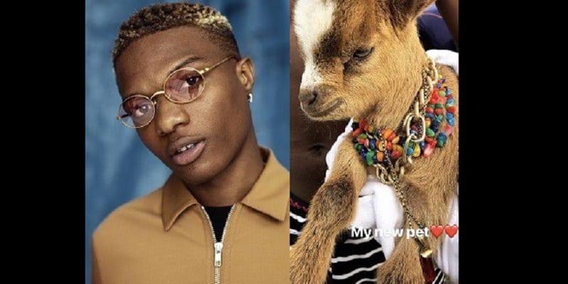 Photo de Showbiz: Wikzid présente son nouvel animal de compagnie…Une chèvre!