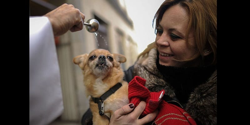 Photo de Religion: L'église d'Angleterre veut autoriser le baptême des animaux