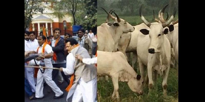 Photo de Inde: Un musulman battu à mort pour avoir tué une vache
