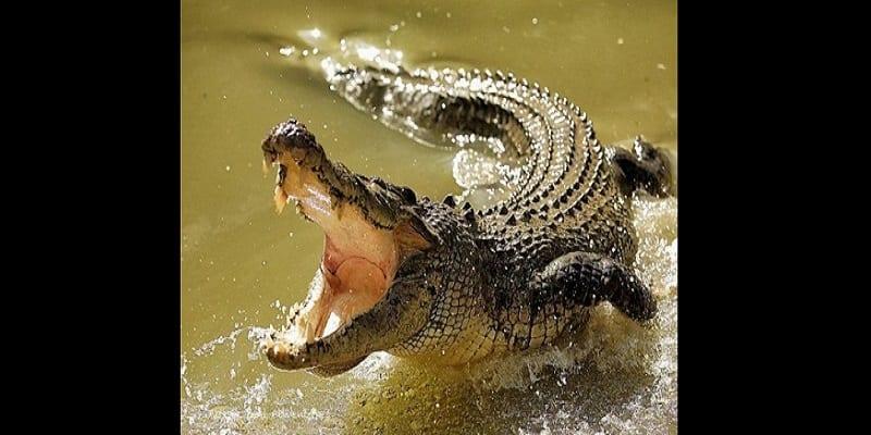 Photo de Ouganda: une mère et son bébé dévorés par un crocodile