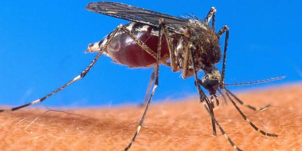Photo de Lutte contre le Paludisme: Les Etats-Unis et la Côte d'Ivoire présentent le plan d'action 2018-2019