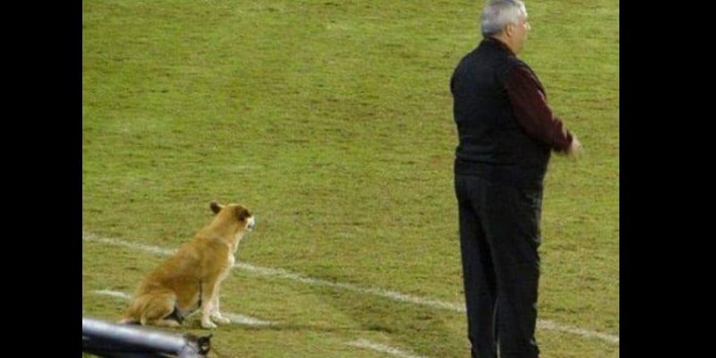 Photo de Paraguay: Un chien nommé au poste d'entraîneur adjoint (photos)