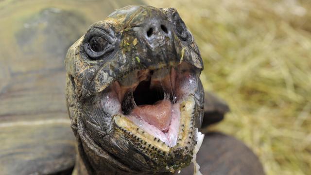 Photo de Incroyable, une tortue morte retrouvée dans les organes génitaux d'une femme