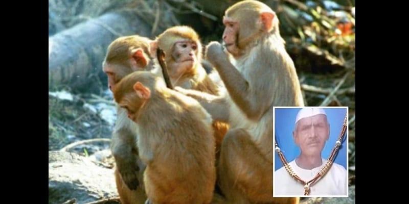 Photo de Inde: Un homme de 72 ans lapidé à mort par des singes