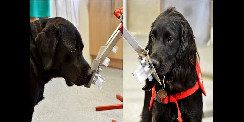 Photo de Les chiens pourraient bientôt détecter le paludisme. Voici comment!