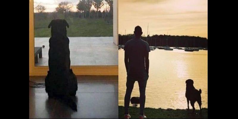 Photo de Disparition d'Emiliano Sala: émouvant, son chien continue toujours de l'attendre-Photos