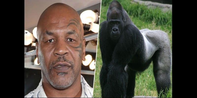 Photo de Révélation : Mike Tyson a offert 10 000 dollars pour un combat avec un gorille