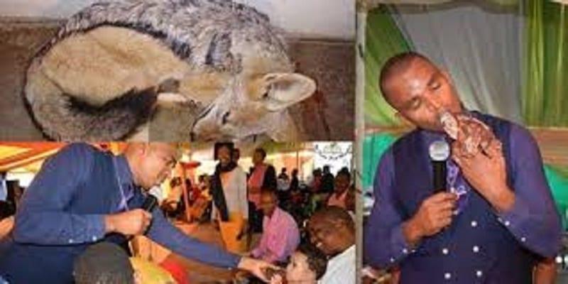 Photo de Botswana: Un pasteur tue un chien et le mange cru durant le culte