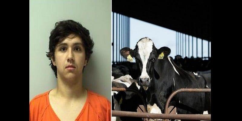 Photo de USA: Un adolescent risque jusqu'à 7 ans de prison