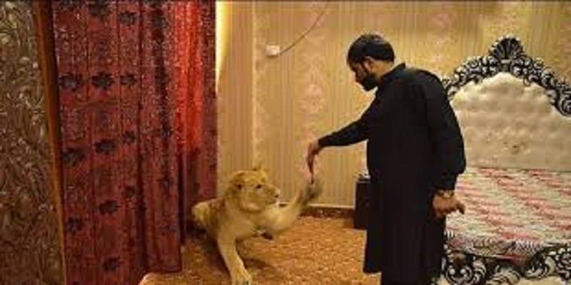 Photo de Zulkaif Chaudhary, l'homme qui a un lion comme animal de compagnie et qui dort dans son lit: Vidéo