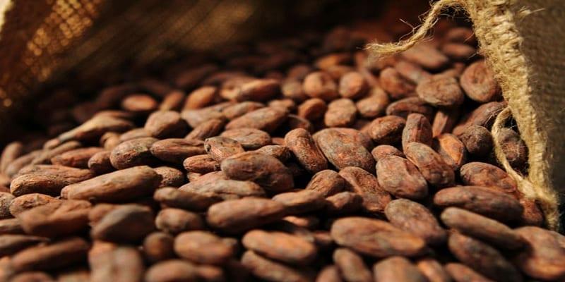 Photo de Santé : Les bienfaits de la consommation du cacao