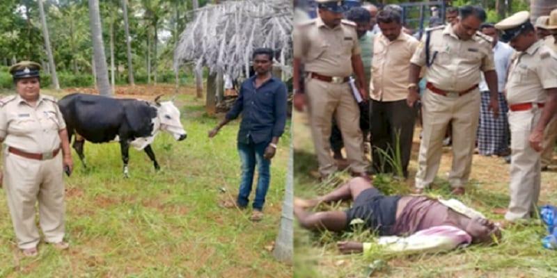 Photo de Inde: un voleur meurt après avoir reçu un coup d'une vache volée dans ses parties intimes
