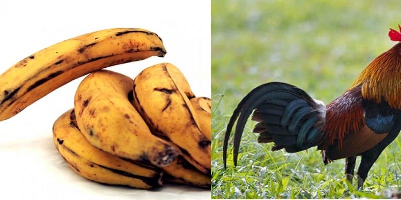 Photo de Ghana: Il écope d'une lourde peine pour avoir volé de la banane plantain et un coq