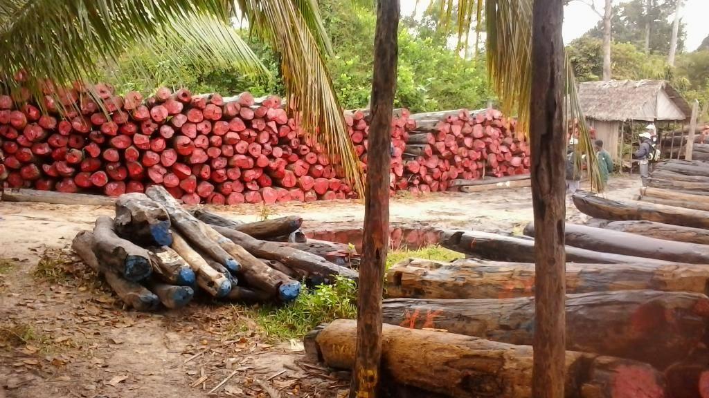 Photo de Madagascar : Arrêt de la vente du bois précieux