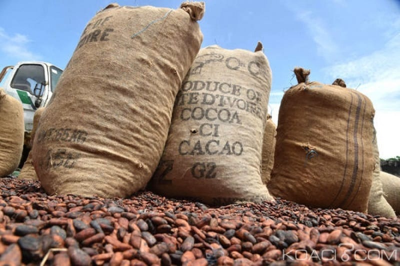 Photo de Économie: Le cacao ivoirien est en danger