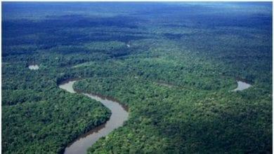 Photo de Bassin du Congo : 60 millions de dollars pour la forêt du Congo et la gestion des tourbières