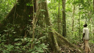 Photo de Le Gabon va recevoir 136 millions d'euros pour lutter contre la déforestation