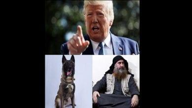 Photo de Trump révèle une photo du chien, héros de l'assaut américain contre le chef de Daech