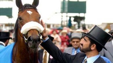 Photo de Dubaï : Cheikh Mohammed dépense plus de 4 millions de dollars pour un cheval (photos)