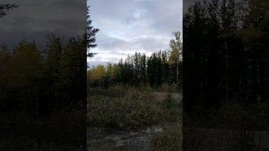 Photo de Canada: un étrange cri dans la forêt enflamme la toile-Vidéo