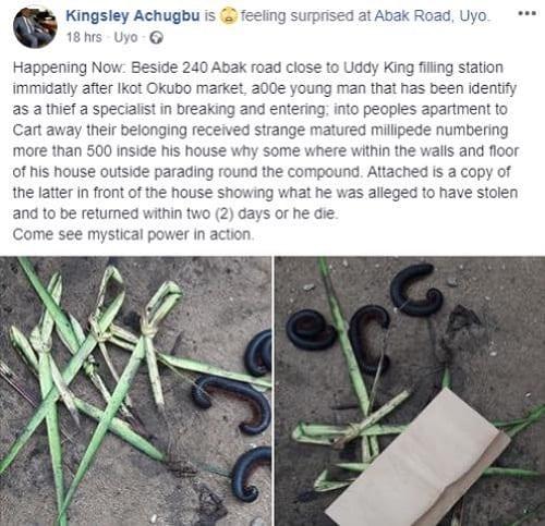 Insolite: un voleur aurait reçu la visite de plusieurs mille-pattes ''pour retourner des objets volés''