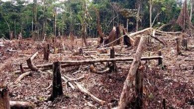 Photo de Société : La Côte d'Ivoire a perdu 90% de son patrimoine forestier