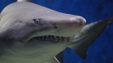 Photo de Horreur: un footballeur professionnelle de 21 ans dévoré par des requins
