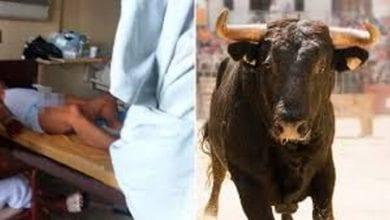 Photo de Il prend un stimulant sexuel utilisé pour l'élevage de taureaux, et le pire se produit